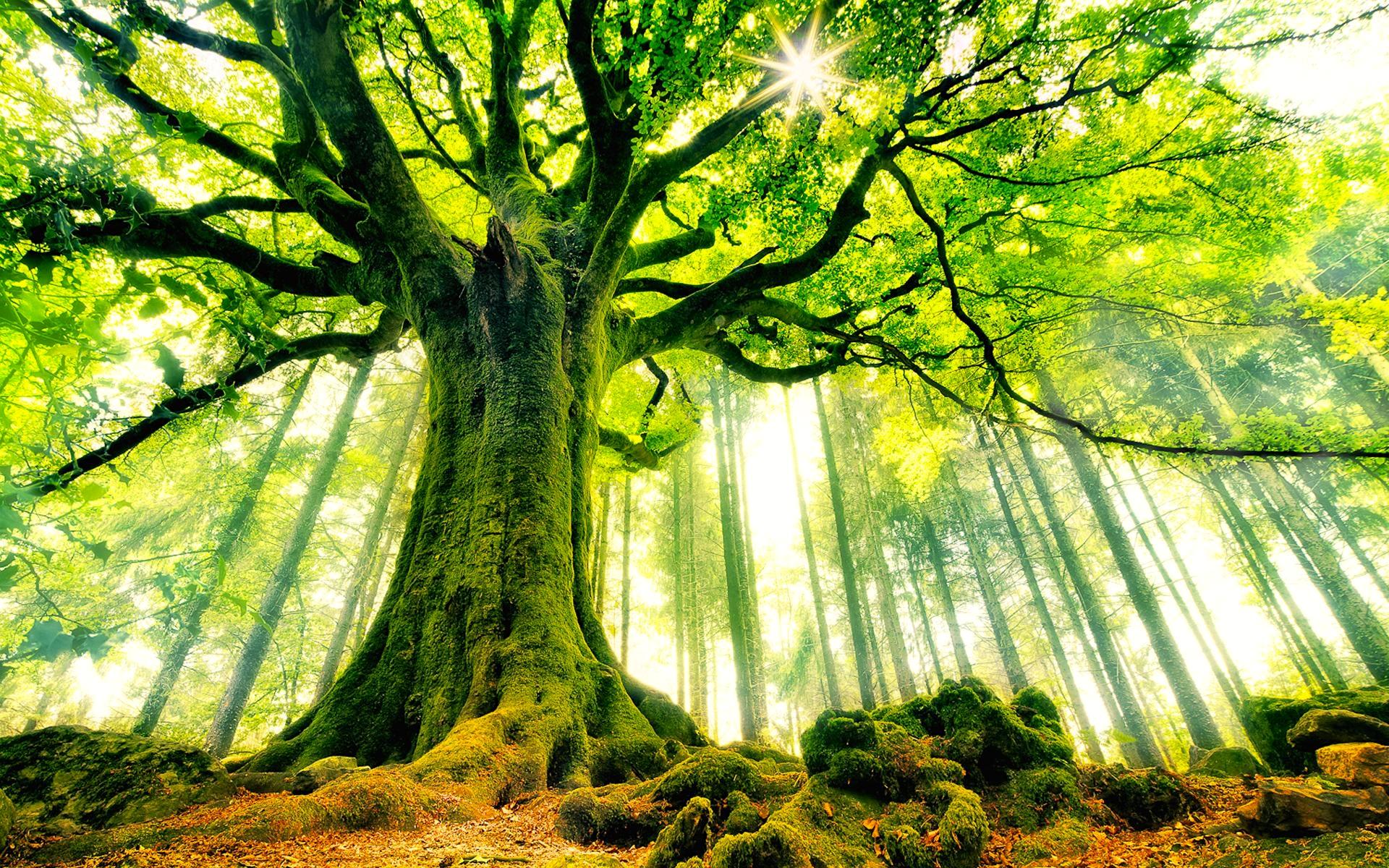 tree-wallpaper-background